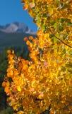 Berg achter Aspen Leaves Stock Afbeelding