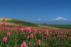 Berg Ararat. Stock Afbeelding