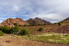 Berg av Bolivia, altiplano Royaltyfri Fotografi