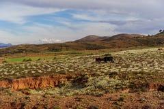 Berg av Bolivia, altiplano Arkivfoton