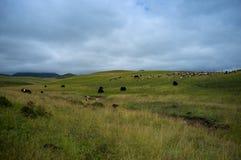Berg av Gannan Arkivfoton
