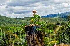 Berg av Minas Gerais Brazil Royaltyfria Foton
