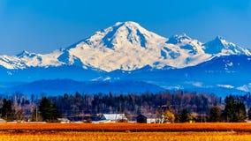 Berg-Bäcker, ein schlafender Vulkan in Washington State sah von den Blaubeerfeldern von Glen Valley nahe Abbotsford BC, Kanada an lizenzfreies stockbild