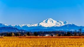 Berg-B?cker, ein schlafender Vulkan in Washington State sah von den Blaubeerfeldern von Glen Valley nahe Abbotsford BC, Kanada an stockbild