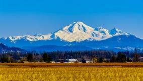 Berg-B?cker, ein schlafender Vulkan in Washington State sah von den Blaubeerfeldern von Glen Valley nahe Abbotsford BC, Kanada an stockfotos