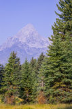 Berg bak träd Fotografering för Bildbyråer