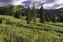 Berg Bellview vom gotischen Campingplatz in Colorado Stockbilder