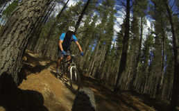 Berg Biking stock foto
