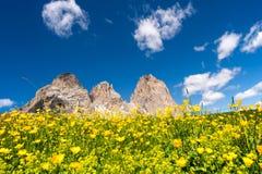 Berg blüht, Sella in Val Gardena mit der Sella-Gruppe wandernd Lizenzfreies Stockfoto