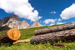 Berg blüht, Sella in Val Gardena mit der Sella-Gruppe wandernd Stockfotos