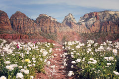 Berg blommar bakgrund Royaltyfri Foto
