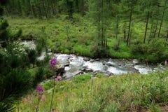 Berg bosbloemen op de achtergrond van bergrivier stock foto