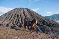 Berg Bromo mit einem lokalen Pferd stockbilder