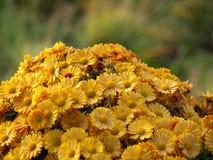 Berg der Blumen Stockfotografie