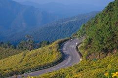 Berg der mexikanischen Sonnenblume Lizenzfreies Stockfoto