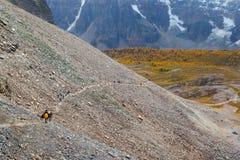 Berg die in de Canadese Rotsachtige Bergen wandelen Royalty-vrije Stock Foto