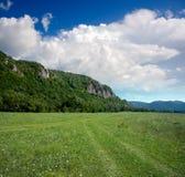 Berg die door bos wordt behandeld Stock Fotografie