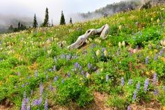 Berg die in wilde bloemen met mist wordt behandeld Stock Afbeelding