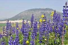 Berg en blauwe bloemen met blauwe hemel royalty-vrije stock foto's