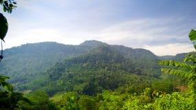 Berg en bos stock foto's