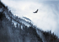 Berg en Eagle royalty-vrije illustratie