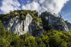 Berg en Forest Landscape Stock Fotografie