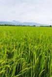 Berg en groen padieveld in Thailand Royalty-vrije Stock Afbeelding