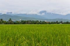 Berg en groen padieveld in Thailand Royalty-vrije Stock Fotografie