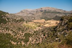 Berg en vallei in Majorca Stock Foto