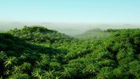 Berg fältlandskap med palmträd Djungel Realistisk animering 4K flyg- sikt