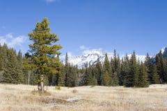 berg för 3 äng Arkivfoto