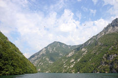 Berg för Drina flodkanjon Royaltyfri Bild