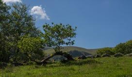 berg för falls för aberabergwyngregyncarneddau near den norr uk-byn wales Royaltyfri Foto