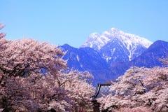 Berg för körsbärsrött träd och snö royaltyfri foto