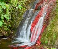 berg för klein för africa udddrakenstein nära paarl sköt den västra södra vattenfallet Royaltyfri Fotografi
