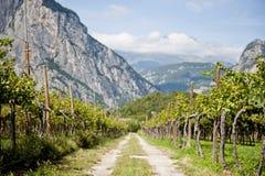 Berg för vingårdvägbana Royaltyfria Bilder