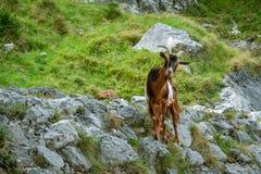 berg f?r france getliggande Omsorger som Trekking rutten, Asturias royaltyfri foto