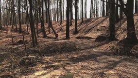 Berg-fietser rit in het park, die door de camera, langzame mo overgaan stock footage