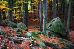 Berg Forest Autumn Scenery lizenzfreie stockfotos