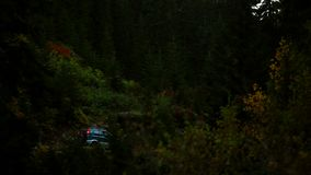 Berg Forest Valley S?rja tr?d med skogen stock video