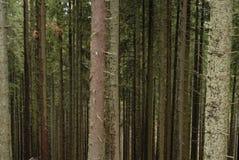 Berg forrest Lizenzfreies Stockfoto