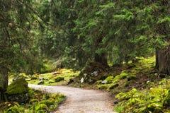 Berg Forrest bij het overzees van Koningen in Berchtesgaden Royalty-vrije Stock Afbeelding