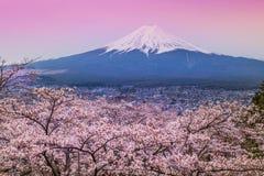 Berg Fuji i våren, körsbärsröd blomning Sakura Arkivfoto