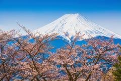 Berg Fuji i våren, körsbärsröd blomning Sakura Arkivbild