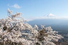 Berg Fuji met sneeuw GLB en Sakura Cherry-bloesem als voorgrond stock fotografie