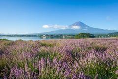 Berg fuji och purpurfärgad färg av lavendel Royaltyfri Fotografi