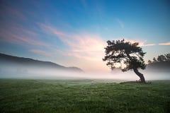 Berg, gog behandelde bomen in de vallei bij zonsopgang Stock Foto's