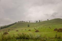 Berg Grönt fält med toner av guling med höstackar och träd långt borta Sommar Augusti arkivfoto