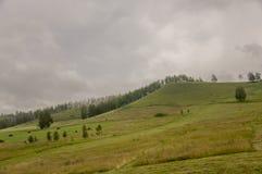 Berg Grönt fält med toner av guling med höstackar och träd långt borta Sommar Augusti arkivbild