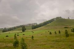 Berg Grönt fält med toner av guling med höstackar och träd långt borta Sommar Augusti royaltyfri foto